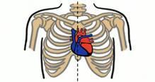Строение сердца человека схема 8 класс