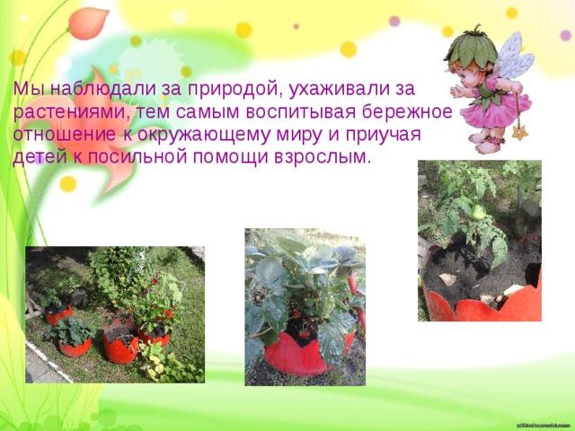 Мы наблюдали за природой, ухаживали за растениями, тем самым воспитывая бережное отношение к окружающему миру и приучая детей к посильной помощи взрослым.