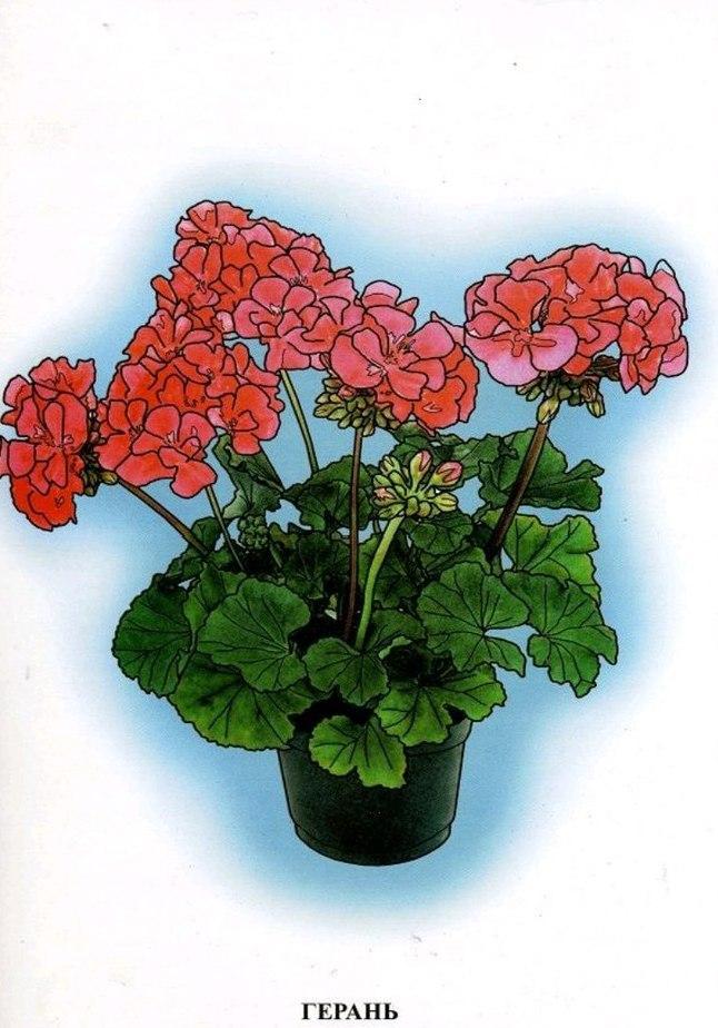 Картинки домашние цветы для детей, картинки днем