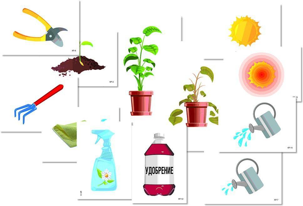 Картинки для доу рост растений