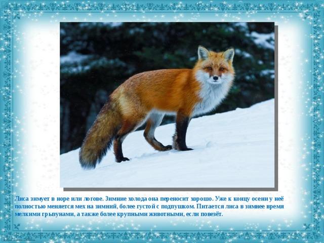 картинки как лиса готовится к зиме поводу первого говорить