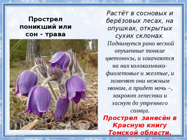 Растения из красной книги томской области фото и описание