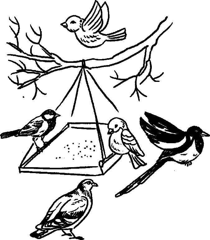 раскраска кормление птиц зимой волосах может