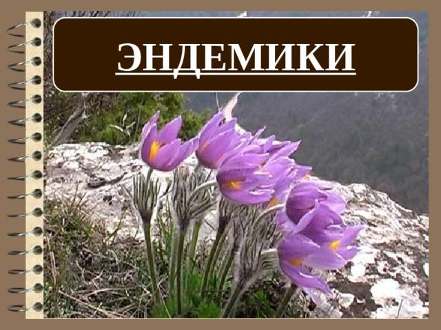 эндемики россии животные и растения него очень