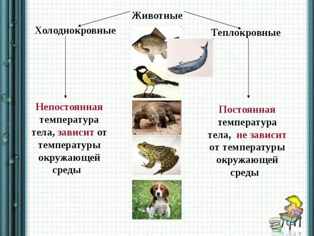 Животные Холоднокровные Теплокровные Непостоянная температура тела, зависит от температуры окружающей среды Постоянная температура тела, не зависит от температуры окружающей среды