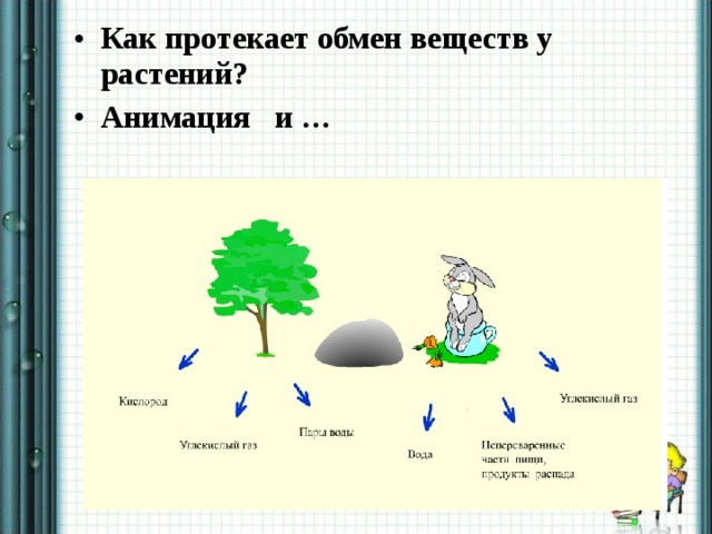 Как протекает обмен веществ у растений? Анимация и …