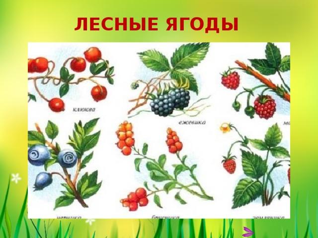 Картинки ягоды садовые и лесные фото и названия для детей