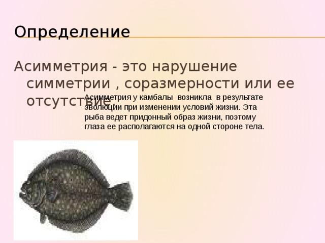 Определение Асимметрия - это нарушение симметрии , соразмерности или ее отсутствие. Асимметрия у камбалы возникла в результате эволюции при изменении условий жизни. Эта рыба ведет придонный образ жизни, поэтому глаза ее располагаются на одной стороне тела.