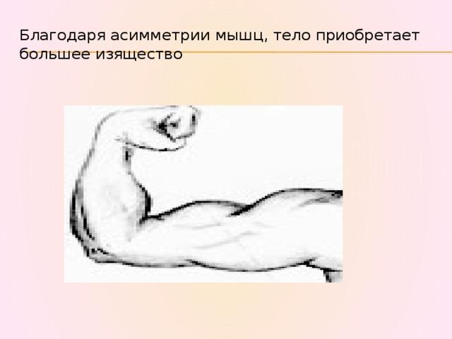 Благодаря асимметрии мышц, тело приобретает большее изящество