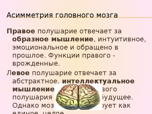 Асимметрия головного мозга Правое полушарие отвечает за образное мышление , интуитивное, эмоциональное и обращено в прошлое. Функции правого - врожденные. Л евое полушарие отвечает за абстрактное, интеллектуальное мышление . Функции левого полушария обращены в будущее. Однако мозг функционирует как единое целое
