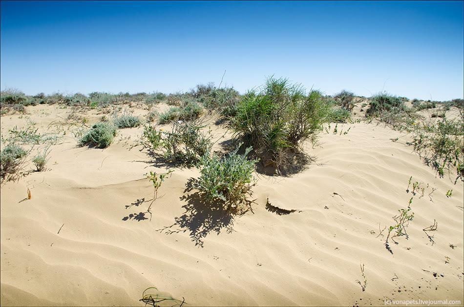 Картинки полупустынь и пустынь россии