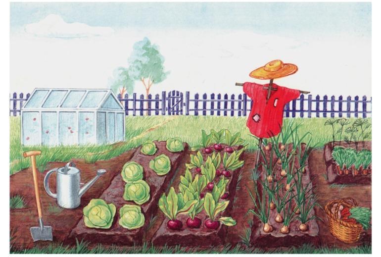 Картинки для проекта наш огород тесто