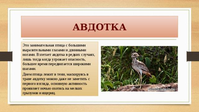 презентация птицы красной книги