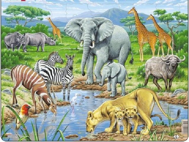 тематические картинки животные жарких стран поздравительные