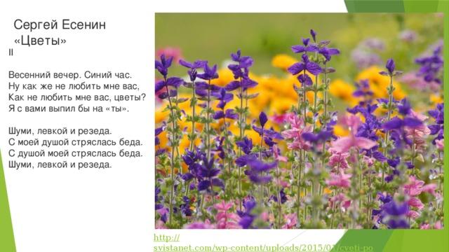 Магазин цветов, цветы на есенин купить киев