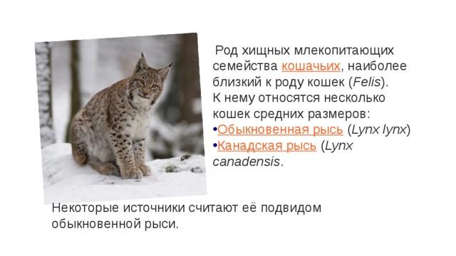 Род хищных млекопитающих семейства кошачьих , наиболее близкий к роду кошек ( Felis ). К нему относятся несколько кошек средних размеров: Обыкновенная рысь ( Lynx lynx ) Канадская рысь ( Lynx canadensis . Некоторые источники считают её подвидом обыкновенной рыси.
