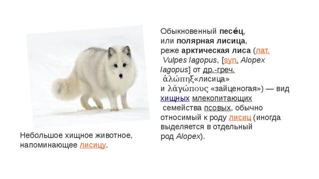 Обыкновенный песе́ц , или полярная лисица , реже арктическая лиса ( лат. Vulpes lagopus , [ syn . Alopex lagopus ] от др.-греч. ἀλώπηξ «лисица» и λᾰγώπους «зайценогая») — вид хищных млекопитающих семейства псовых , обычно относимый к роду лисиц (иногда выделяется в отдельный род Alopex ). Небольшое хищное животное, напоминающее лисицу .