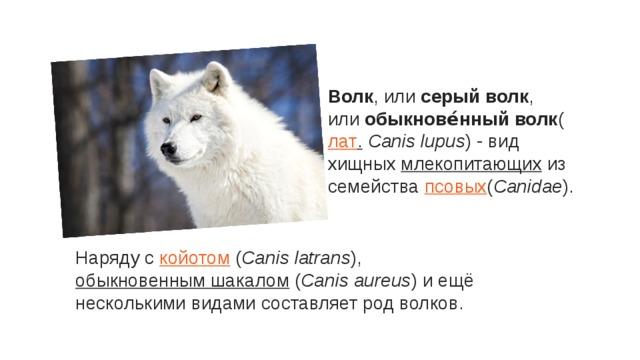 Волк , или серый волк , или обыкнове́нный волк ( лат . Canis lupus ) - вид хищных млекопитающих из семейства псовых ( Canidae ). Наряду с койотом ( Canis latrans ), обыкновенным шакалом ( Canis aureus ) и ещё несколькими видами составляет род волков.