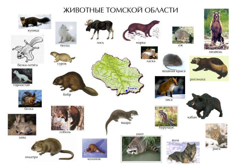 Животные картинки красной книги томской области