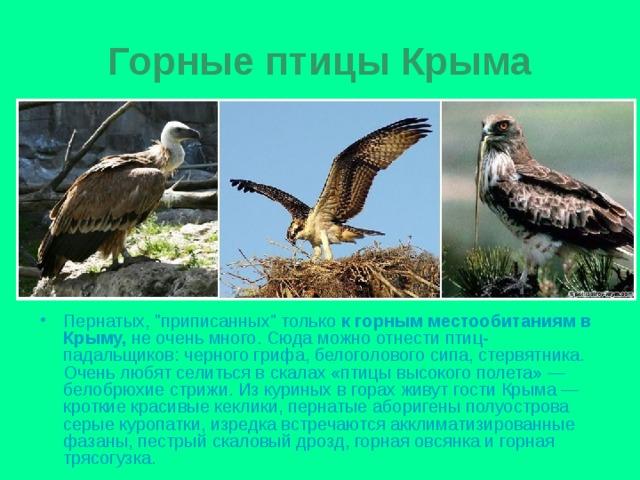крымские хищные птицы