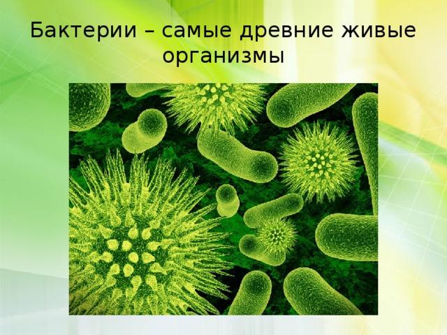 Царство бактерии - Биология - 5 класс