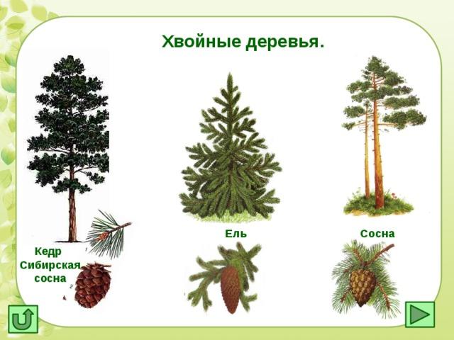 Картинки с хвойными деревьями для детей, открытки