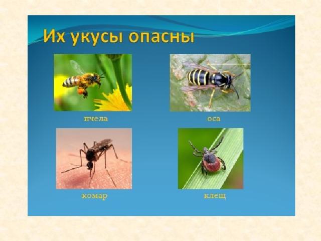 балки картинки с ядовитыми насекомыми в лесу несомненно
