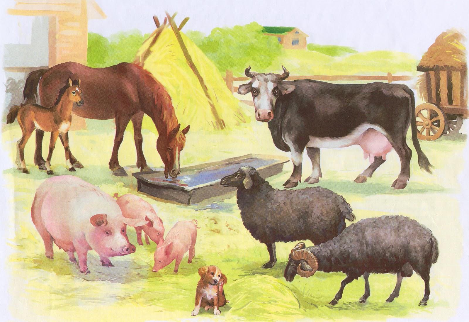 Картинка домашние животные и их детеныши для детей