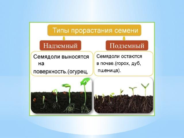 картинки на тему условия прорастания семян одно время