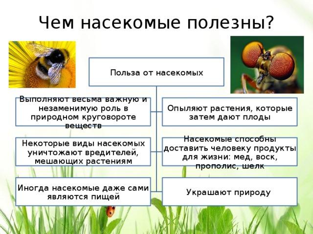 Польза насекомых картинки