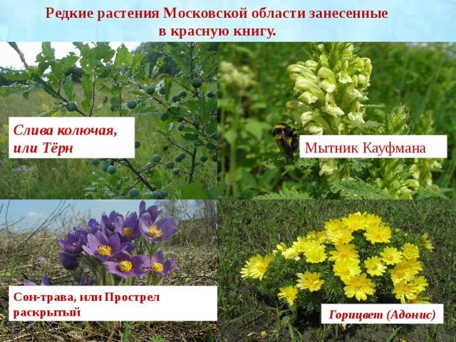картинки растений москвы и подмосковья означает, что