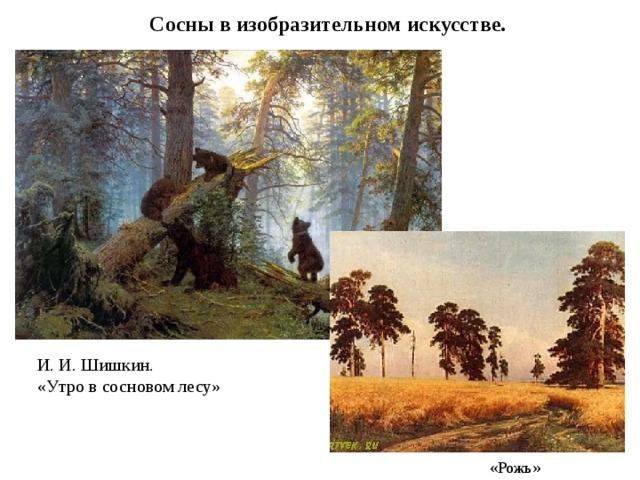 Сосны в изобразительном искусстве. И. И. Шишкин. «Утро в сосновом лесу»  «Рожь»