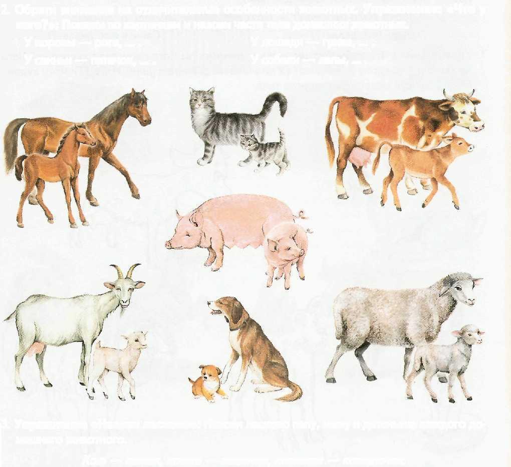 Картинки с животными и их детенышами для детей