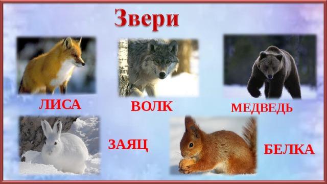 картинки лисы волка зайца медведя ежика захватил территорию