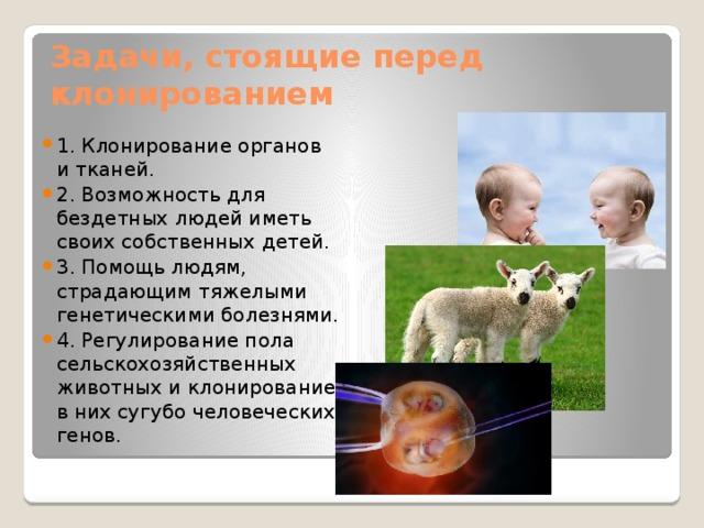 Задачи, стоящие перед клонированием 1. Клонирование органов и тканей. 2. Возможность для бездетных людей иметь своих собственных детей. 3. Помощь людям, страдающим тяжелыми генетическими болезнями. 4. Регулирование пола сельскохозяйственных животных и клонирование в них сугубо человеческих генов.