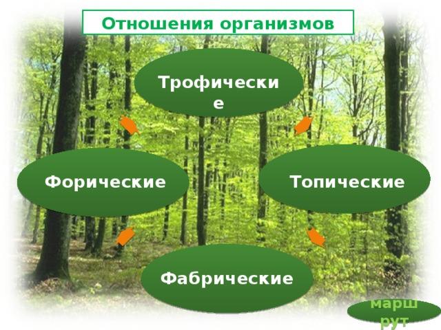 Отношения организмов Трофические Топические Форические Фабрические маршрут