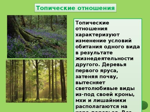 Топические отношения Топические отношения характеризуют изменение условий обитания одного вида в результате жизнедеятельности другого. Деревья первого яруса, затеняя почву, вытесняет светолюбивые виды из-под своей кроны, мхи и лишайники располагаются на коре деревьев. Все эти организмы связаны друг с другом топическими связями