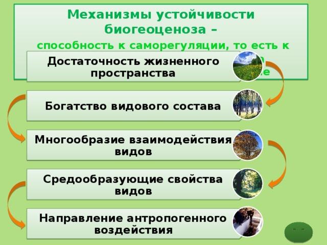 Механизмы устойчивости биогеоценоза –  способность к саморегуляции, то есть к поддержанию своего состава на определенном стабильном уровне Достаточность жизненного пространства Богатство видового состава Многообразие взаимодействия видов Средообразующие свойства видов Направление антропогенного воздействия