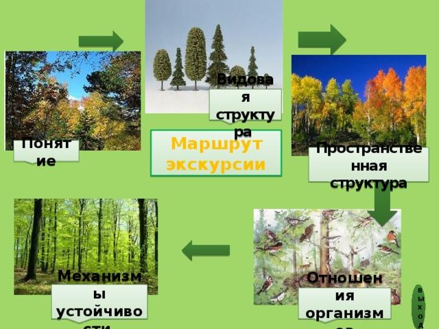 Видовая структура Маршрут экскурсии Понятие Пространственная  структура Механизмы устойчивости выход Отношения организмов