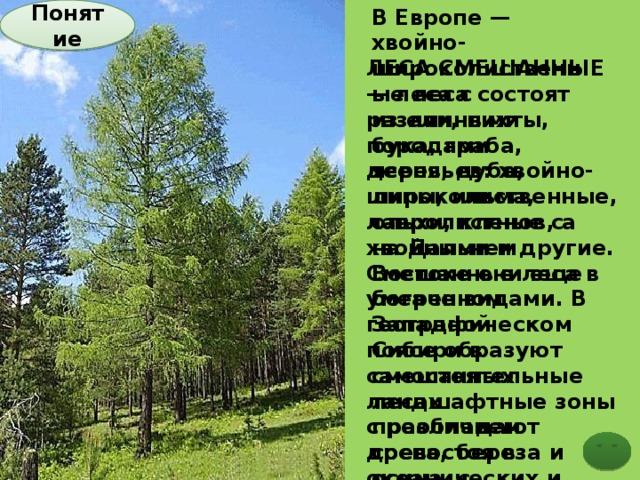 В Европе — хвойно-широколиственные леса состоят из ели, пихты, бука, граба, ясеня, дуба, липы, ильма, ольхи, кленов, а на Дальнем Востоке они еще богаче видами. В Западной Сибири в смешанных лесах преобладают сосна, береза и осина, с примесью ели, кедра и пихты. Почвы дерново-подзолистые, серые лесные, а на Дальнем Востоке бурые лесные Понятие  ЛЕСА СМЕШАННЫЕ — леса с различными породами деревьев: хвойно-широколиственные, лавролистные с хвойными и другие. Смешанные леса в умеренном географическом поясе образуют самостоятельные ландшафтные зоны с различием древостоя в океанических и умеренно континентальных климатических (долготных) зонах