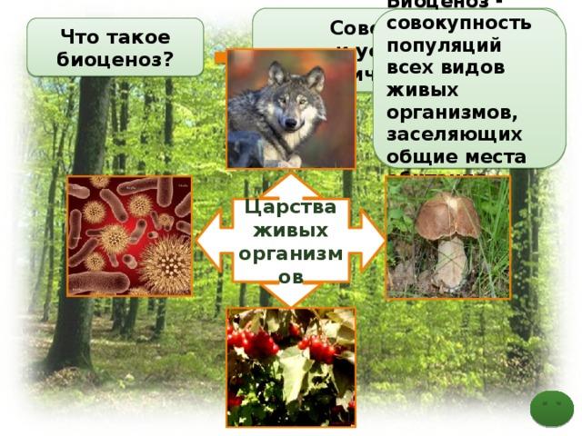 Совершенная  и устойчивая экологическая система Биоценоз - совокупность популяций всех видов живых организмов, заселяющих общие места обитания Что такое биоценоз? Понятие Популяция – элемент биоценоза Царства живых организмов 3