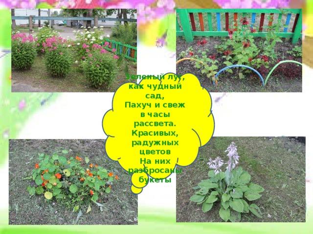 Зеленый луг, как чудный сад,  Пахуч и свеж в часы рассвета.  Красивых, радужных цветов  На них разбросаны букеты
