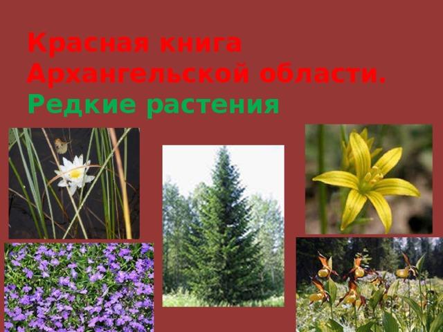 растения красной книги архангельской области фото хвост всегда
