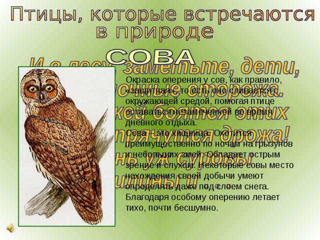 совы перелетные птицы или нет действия