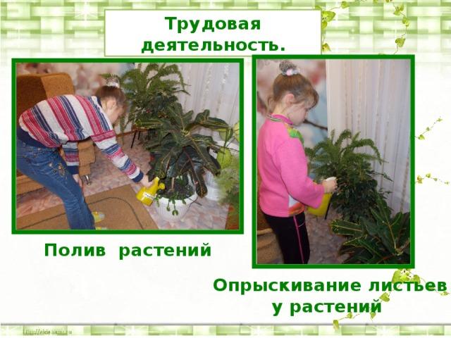 Трудовая деятельность. Полив растений Опрыскивание листьев у растений
