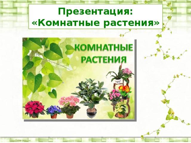 Презентация: «Комнатные растения»