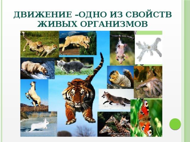 Доклад движение живых организмов 6146