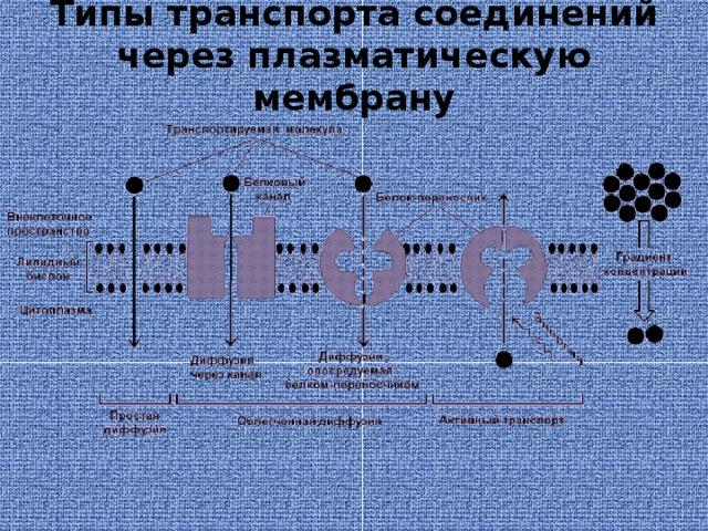 Типы транспорта соединений через плазматическую мембрану