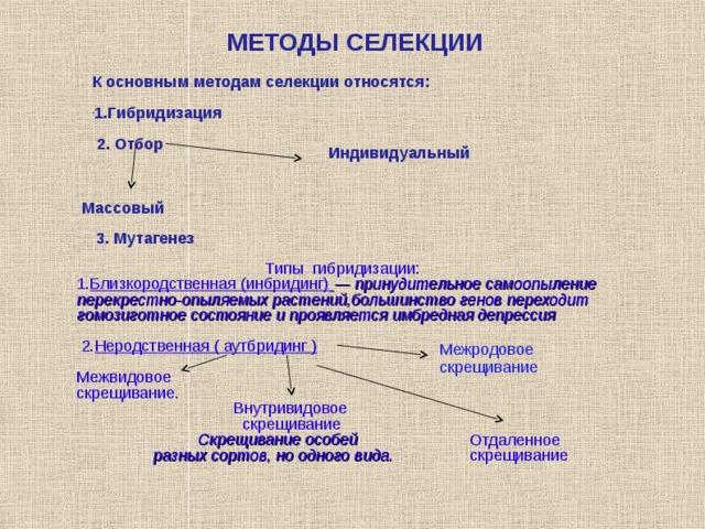 МЕТОДЫ СЕЛЕКЦИИ К основным методам селекции относятся:  1.Г ибридизация   2. О тбор    Индивидуальный  Массовый  3. М утагенез Т ипы  гибридизации: 1. Близкородственная (инбридинг)  — принудительное самоопыление перекрестно-опыляемых растений,большинство генов переходит гомозиготное состояние и проявляется имбредная депрессия  2. Неродственная ( аутбридинг )  Межвидовое скрещивание.  Внутривидовое  скрещивание  Скрещивание особей  разных сортов, но одного вида.   Межродовое скрещивание Отдаленное скрещивание