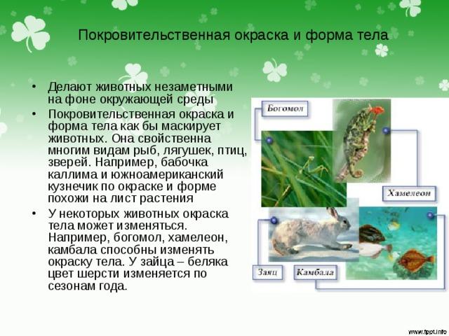 Покровительственная окраска и форма тела Делают животных незаметными на фоне окружающей среды Покровительственная окраска и форма тела как бы маскирует животных. Она свойственна многим видам рыб, лягушек, птиц, зверей. Например, бабочка каллима и южноамериканский кузнечик по окраске и форме похожи на лист растения У некоторых животных окраска тела может изменяться. Например, богомол, хамелеон, камбала способны изменять окраску тела. У зайца – беляка цвет шерсти изменяется по сезонам года.